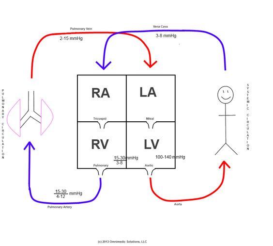 Schematic For Heart Circulation Diagram, Schematic, Get
