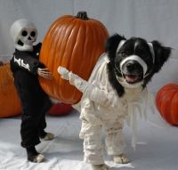 Pet costumes, Unique pets and Costumes on Pinterest