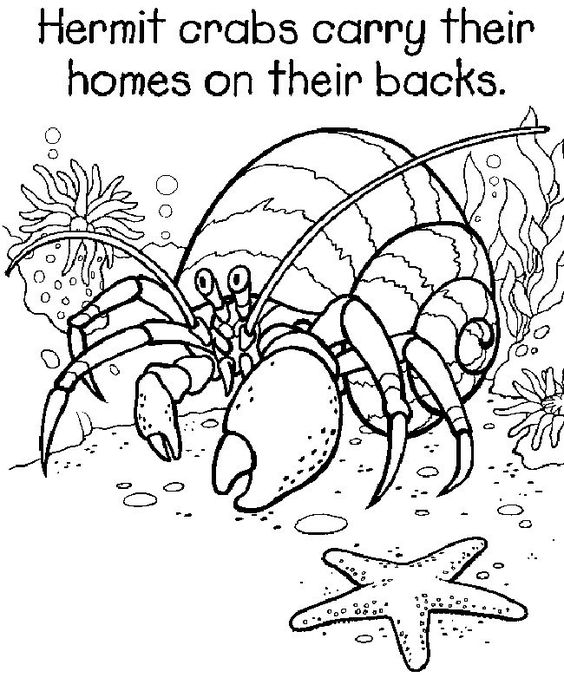Hermit crabs, Coloring pages and Crabs on Pinterest