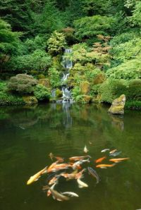 Koi ponds, Japanese gardens and Koi on Pinterest