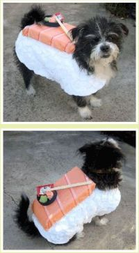 DIY sushi dog costume | cuddles. | Pinterest | Halloween ...