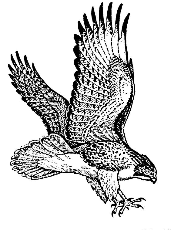Raptors, Bird clipart and Hawks on Pinterest