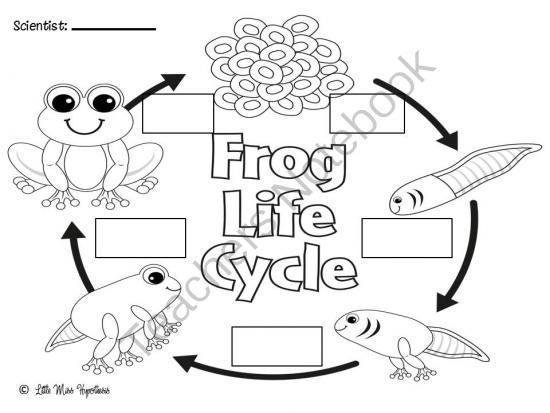 Frog Freebies! from Little Miss Kindergarten on