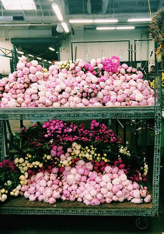 a visit to san francisco's flower mart / sfgirlbybay: