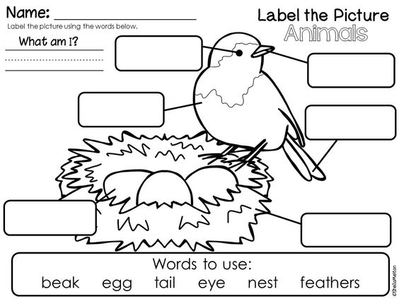 Label the Picture FREEBIES! Includes Animal