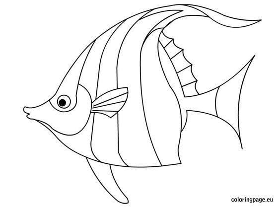 Coloring, Animals and Angelfish on Pinterest