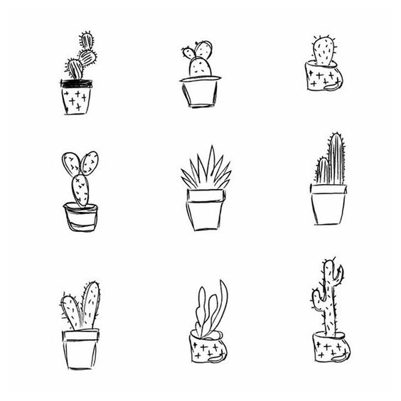 All cactuses together 〰 ️ ️〰 #cactus #cactuses #plant #