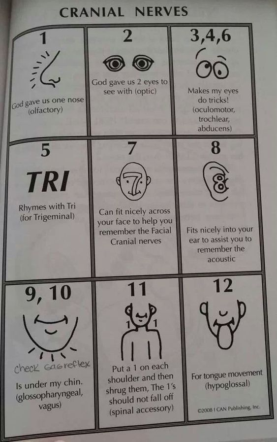 Cranial nerves, Nurses and The check on Pinterest