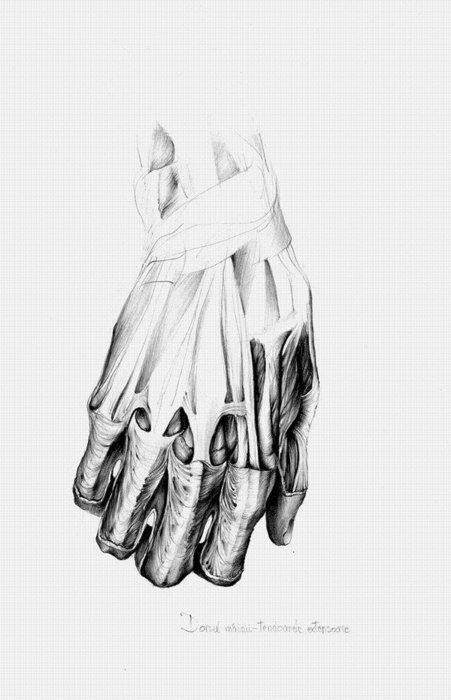 Drawing hands, All things and Human body on Pinterest