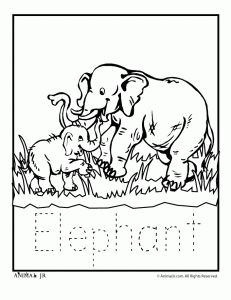 Animal coloring pages, Zoo animals and Coloring pages on