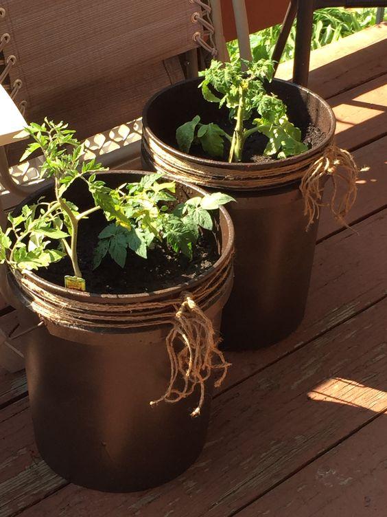 Diy 5 gallon bucket patio container tomato planter Spray a