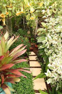Gardens, Tropical and Australia on Pinterest