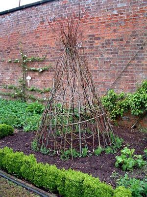 If you have a lot of tall prunings, save them to make a wigwam type support for sweet peas or climbing beans. Clumps of sweet peas have been planted around the base and will soon cover the structure with foliage and scented flowers.: