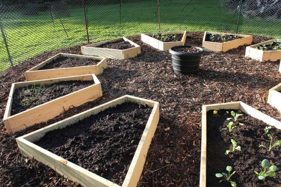 raised bed garden:
