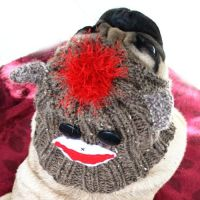 Sock Monkey Dog Hat - Dog Costume - Dog Clothing - Pet ...
