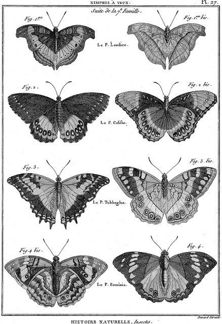 Papillons and Photos on Pinterest