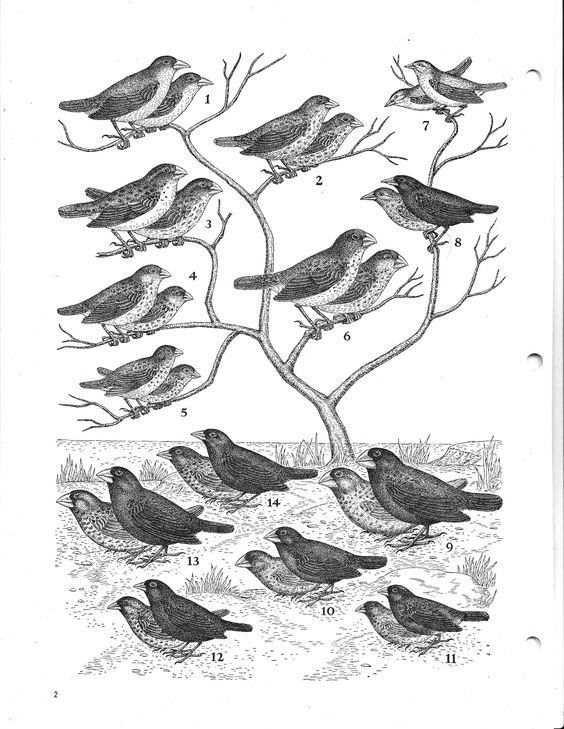 Finches, Theory of evolution and Charles darwin on Pinterest