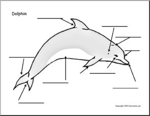 Life Cycle Diagram Of A Dolphin Whale Evolution Diagram