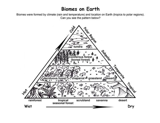 Biomes and Charts on Pinterest