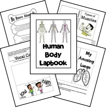 Human body unit, Human body and Lap books on Pinterest