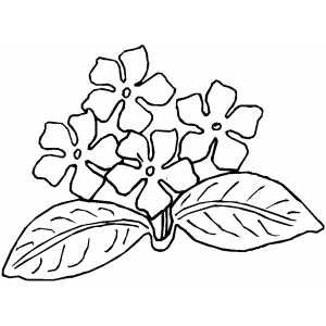 African violet, Coloring pages and Violets on Pinterest