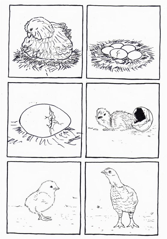 Life cycles, A chicken and Chicken on Pinterest