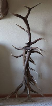 Rustic Elk Antler coat Rack // outbackantlerchandel on