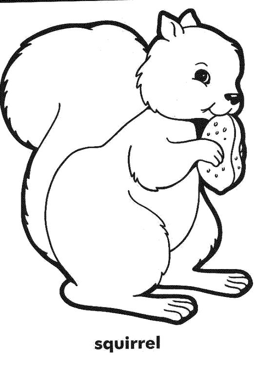 Squirrel, Coloring pages and Coloring on Pinterest