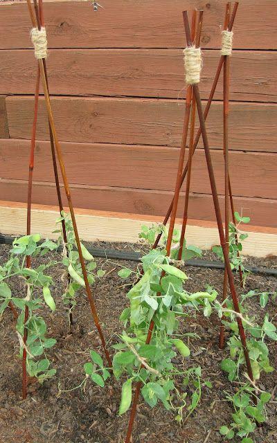 9e4a08a7872e8f4612155558d72348bc 7 Seeds for Your Summer Garden