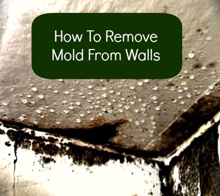 How To Remove Mold From Walls from HousewifeHowTos