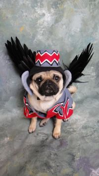 Flying monkey dog costume. Okay, this is just beyond cute