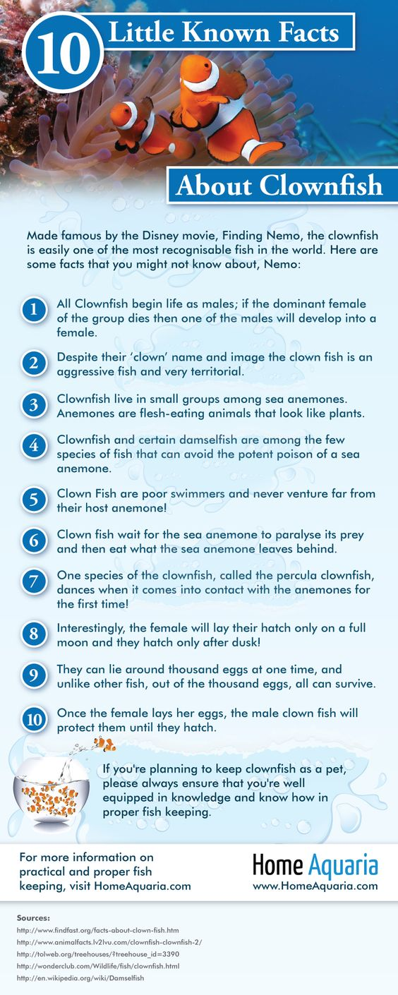 Ten Facts about Clownfish chart