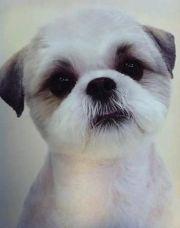 dog grooming cornwall and shih