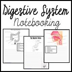 digestive, respiratory, skeletal, and muscular system