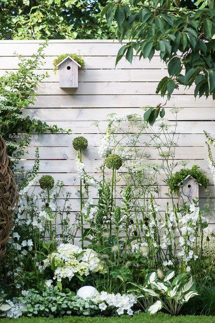 Agapanthus 'White heaven', Hydrangea macrophylla 'Nymphe', Campanula persicifolia Alba; Digitalis purpurea Albiflora, Hosta 'Fire and ice', Lamium maculatum 'White Nancy':