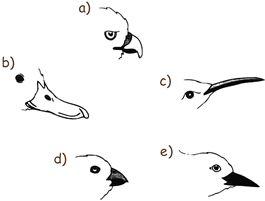 Birds of prey, Birds and Graphics on Pinterest