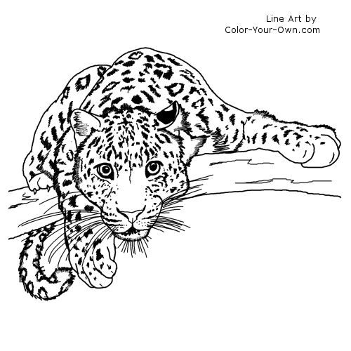 Leopards, Coloring for adults and Coloring on Pinterest