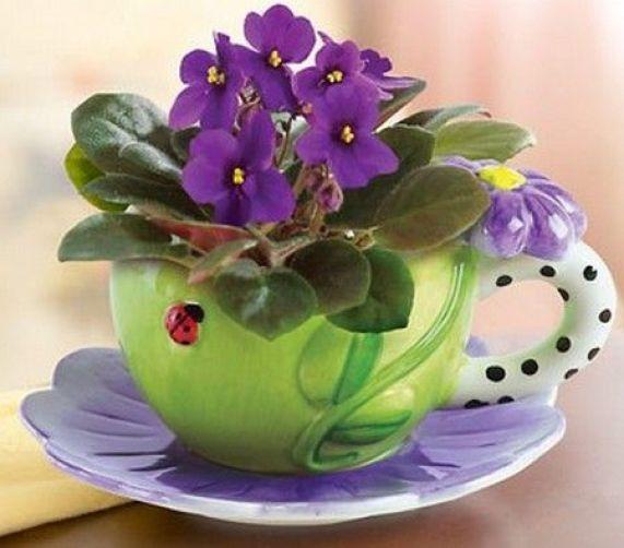 La violetta africana è una pianta di piccole dimensioni, molto semplice da coltivare e perfetta per decorare qualsiasi stanza