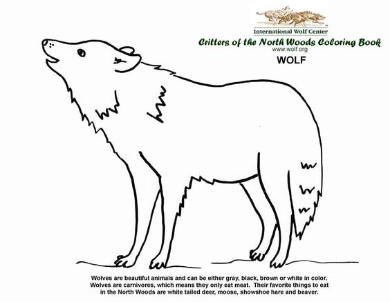 Wolves, Coloring and Coloring books on Pinterest