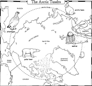 Arctic tundra, Worksheets and Arctic animals on Pinterest