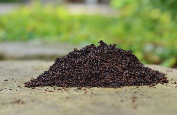 You may not know this, but humans aren't the only ones who love their coffee. Plants, soil, and even worms love a nice, warm serving of coffee, but they're usually okay with just spent coffee grounds. Coffee grounds have numerous benefits and advantages for the... #coffee #gardening #gardeningtips: