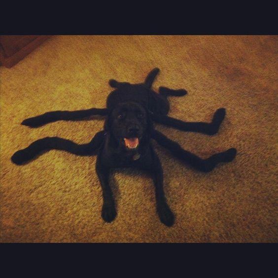 Costumes Halloween And Halloween Costumes On Pinterest
