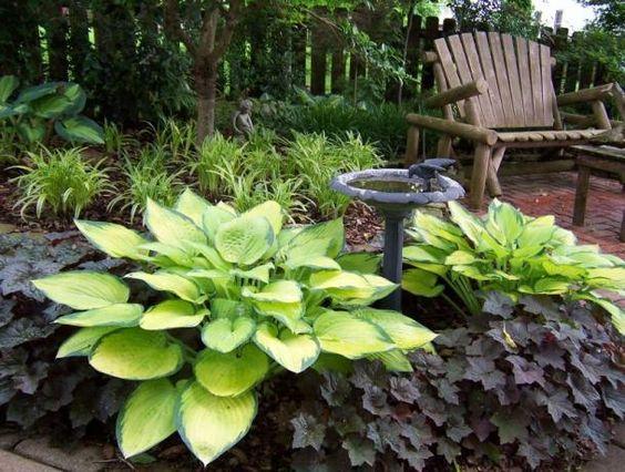 Hosta Garden Idea With Deep Purple Plants Garden AndLandscape