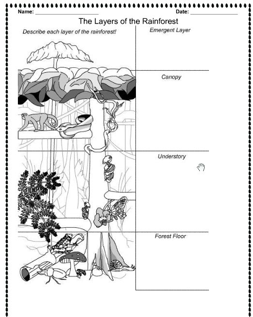 Tropical Rainforest Layers Facts Sketch Coloring Page