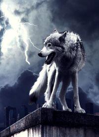 Wolf & Lightning Storm | NATIVE BEAUTY | Pinterest ...