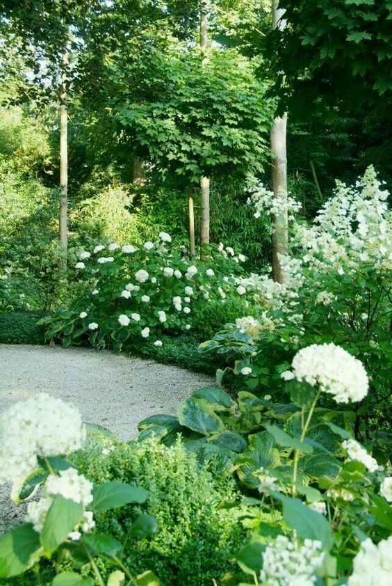 White & Green Garden Design: