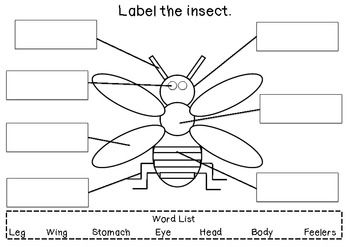 Insects, Writing activities and Activities on Pinterest