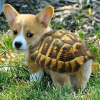Pick: Cute Turtle Pup Of The Day | Pet accessories, Its ...
