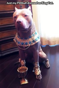 Lifes tough, get a dog (50 Photos)   Pit bull, Search and ...