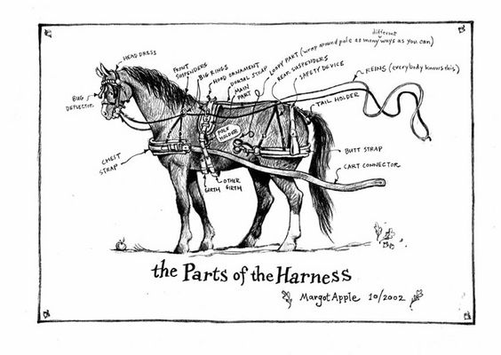 Fun way to describe horse harness parts. Helpful for if we